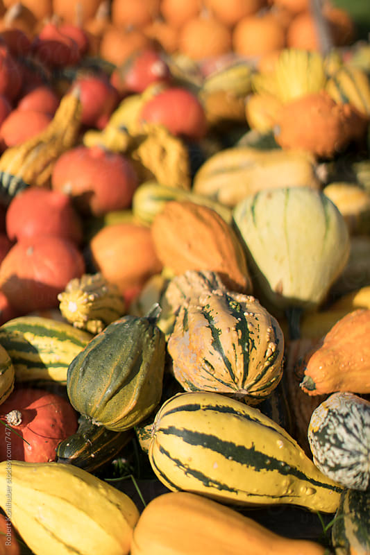 Big pile of colorful pumpkins by Robert Kohlhuber for Stocksy United