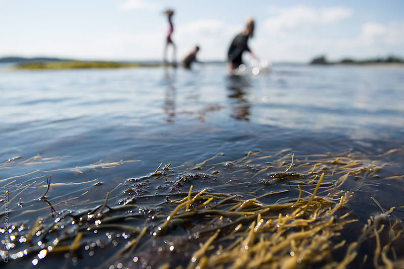 Seaweed floats in the foreground as three kids play in the ocean beyond by Cara Dolan for Stocksy United