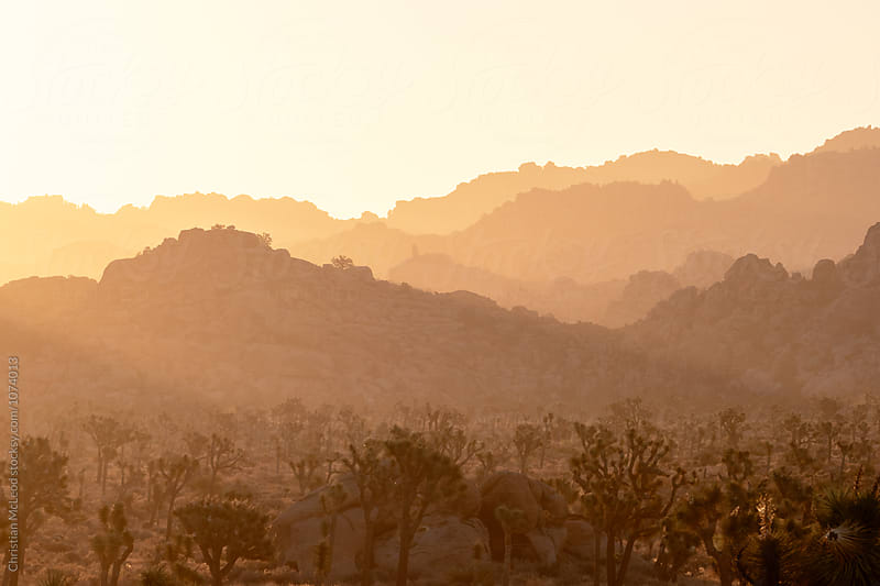 Shades of the desert. by Christian McLeod for Stocksy United