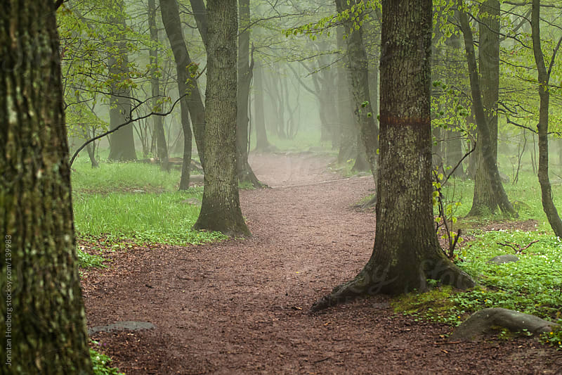 A path into the woods by Jonatan Hedberg for Stocksy United