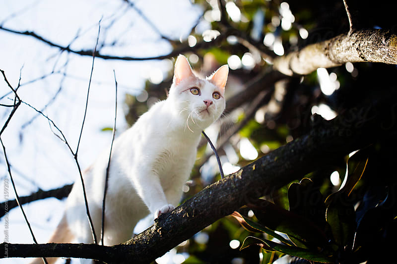 Cat walking on tree branch seen from below by Laura Stolfi for Stocksy United