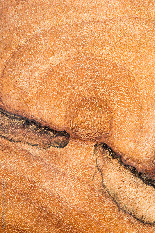 Wood bowl patterns, closeup by Mark Windom for Stocksy United