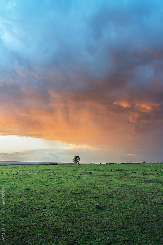 Lonely tree on a stormy day by ACALU Studio for Stocksy United