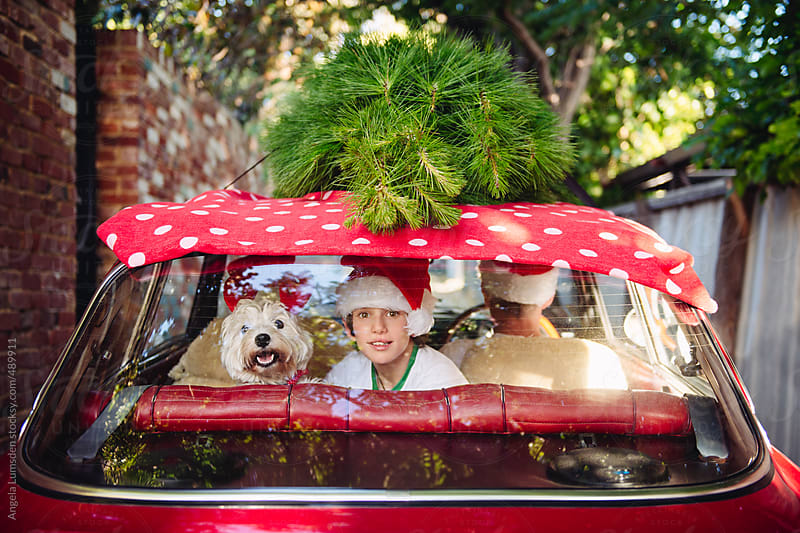 Smiling dog and boy in the backseat of a red car with a christmas tree on the roof by Angela Lumsden for Stocksy United