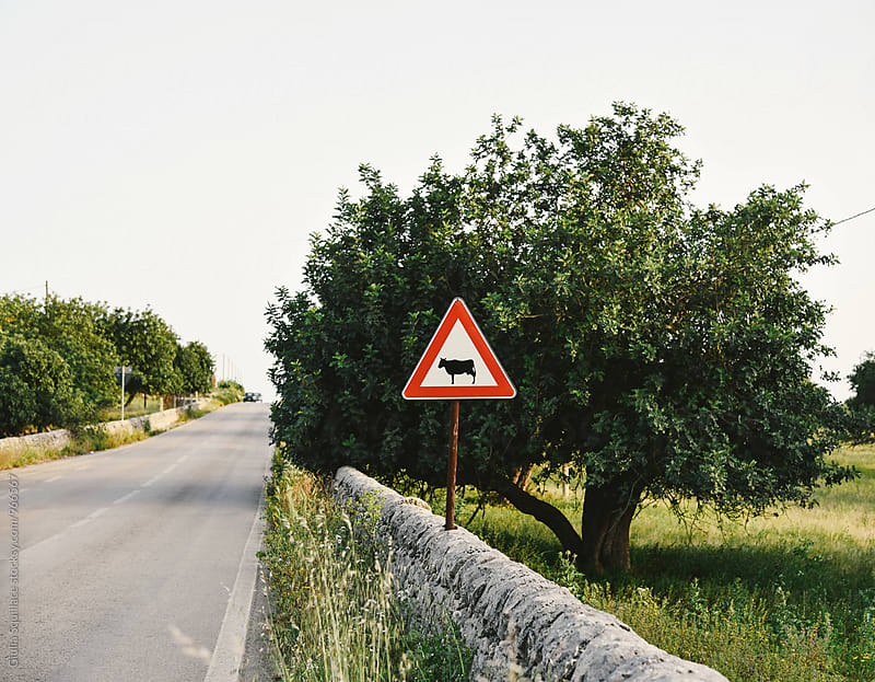 Cow crossing sign along a country road by Giulia Squillace for Stocksy United