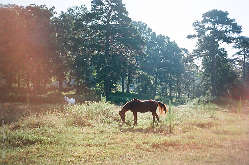 Horse eating grass in a meadow by Jakob for Stocksy United