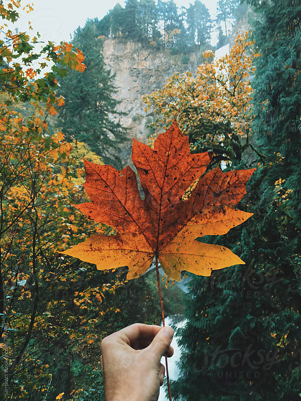 the leaves of fall by ian pratt for Stocksy United