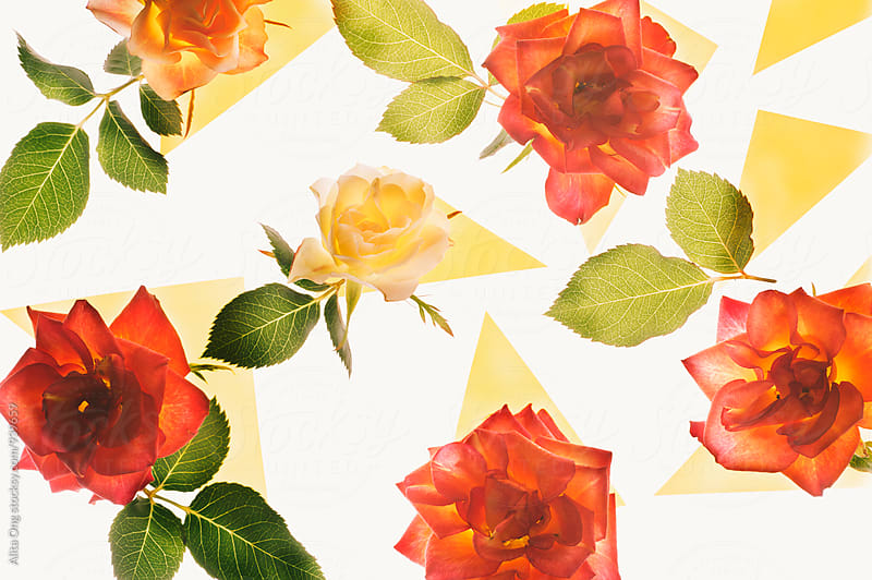 Rose background by Alita Ong for Stocksy United