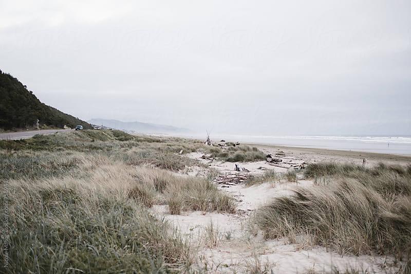 coastal grass on oregon beach by Nicole Mason for Stocksy United