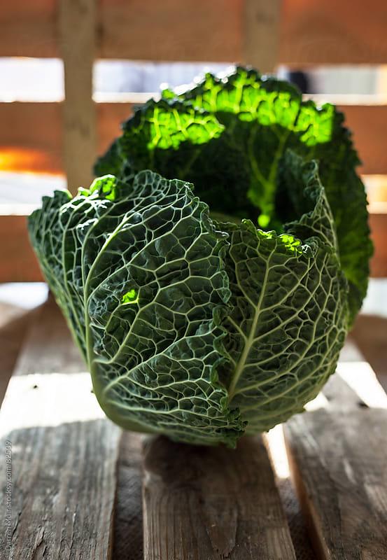 Savoy cabbage.  by Darren Muir for Stocksy United