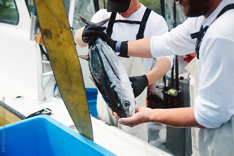 Fresh fish catch on a tuna boat  by Kate Daigneault for Stocksy United