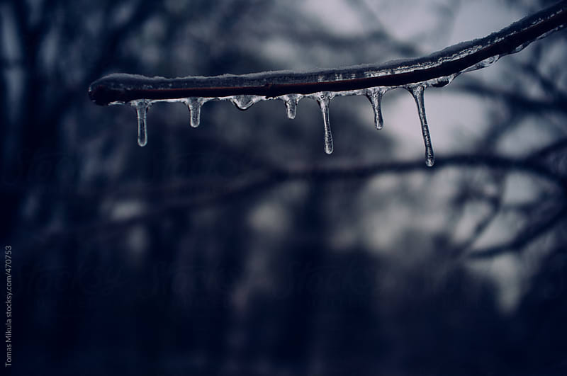 Frozen tree by Tomas Mikula for Stocksy United