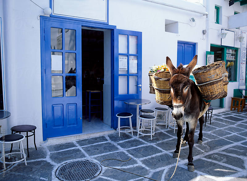 Donkey carrying baskets. Mykonos. Greece. by Hugh Sitton for Stocksy United