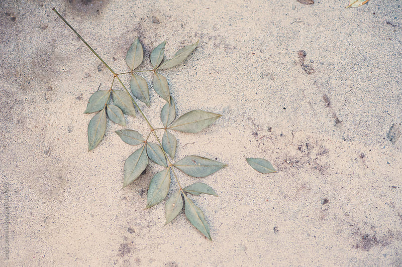Leaves Lay On Textured Concrete by Leigh Love for Stocksy United