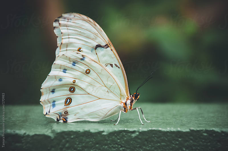 White Butterfly On Green Ledge by Tamara Pruessner for Stocksy United