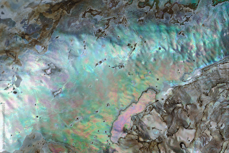 Closeup macrophotograph of iridescence and patterns in abalone shell by Ron Mellott for Stocksy United