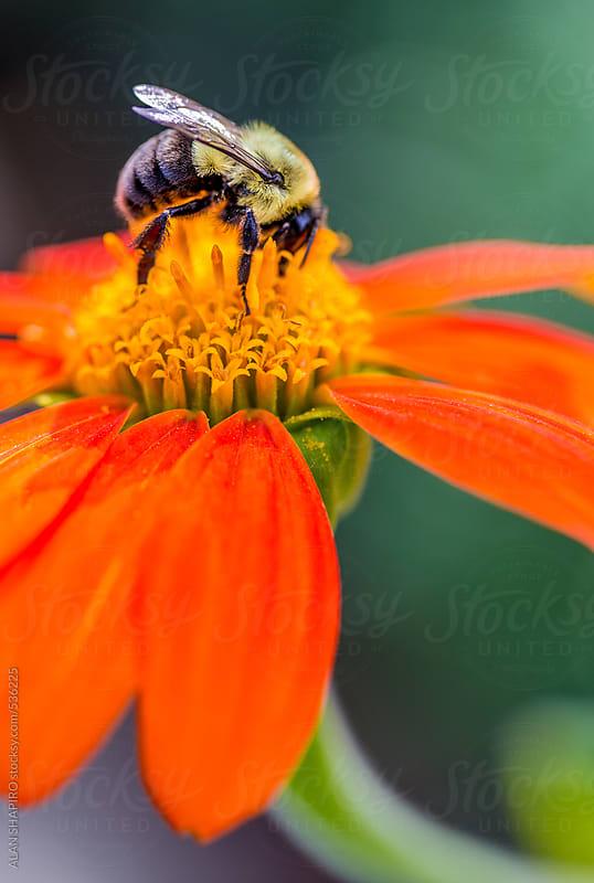 Pollination by alan shapiro for Stocksy United