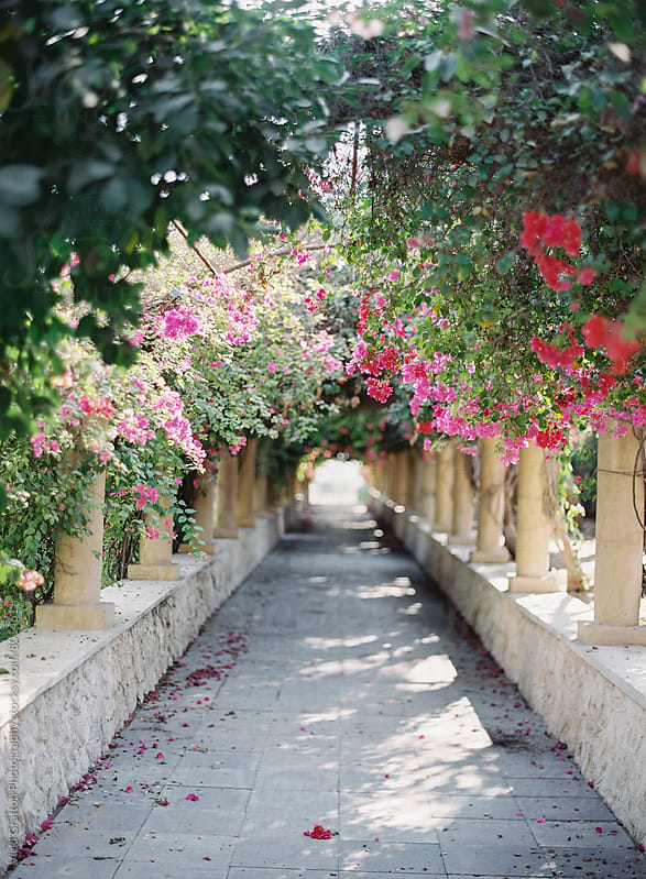 Bougainvillea lined garden pathway  by Vicki Grafton Photography for Stocksy United