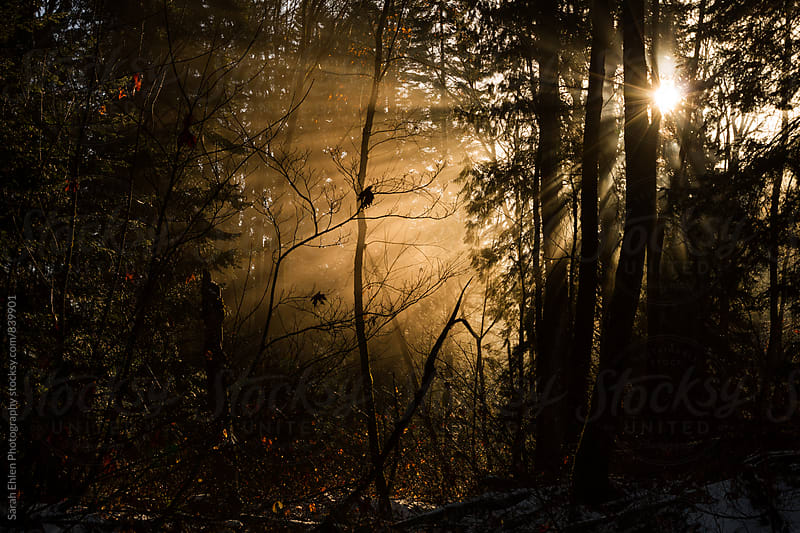 Sunbeams illuminate the forest with a warm glow by Sarah Ehlen Photography for Stocksy United