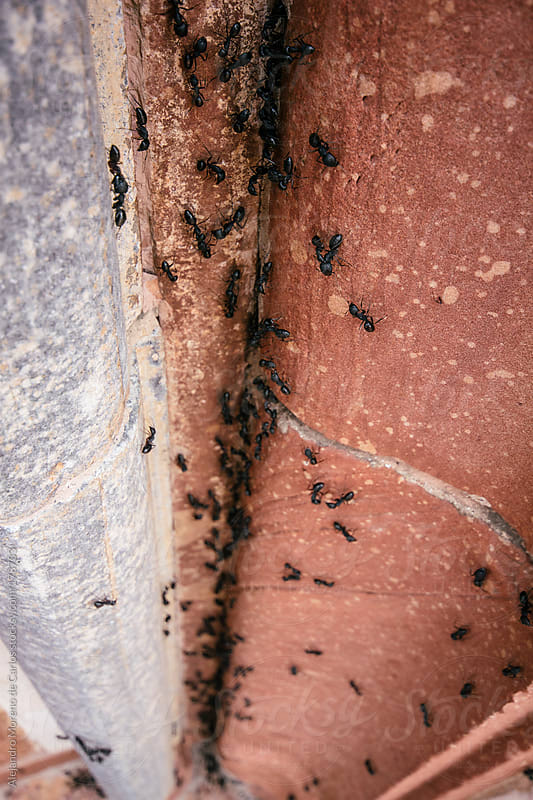 Ants climbing an orange wall by Alejandro Moreno de Carlos for Stocksy United