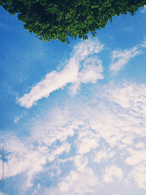 Tree crown and beautiful clouds in the sky by Borislav Zhuykov for Stocksy United