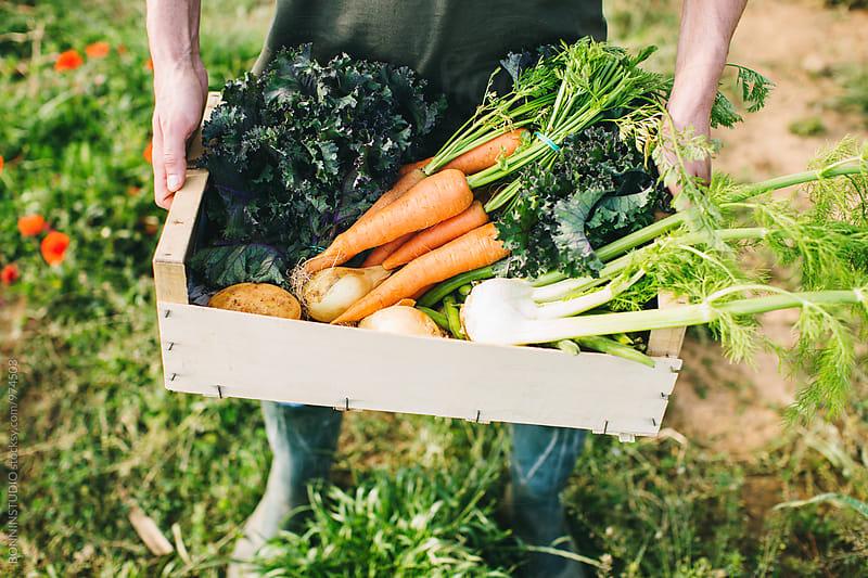 Closeup of farmer holding organic vegetables box. by BONNINSTUDIO for Stocksy United