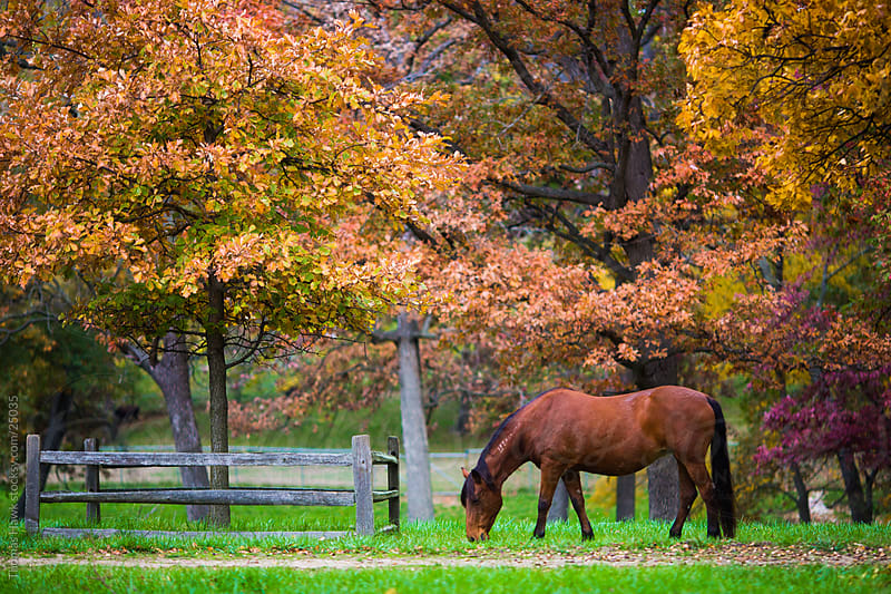 Horse and Trees by Thomas Hawk for Stocksy United