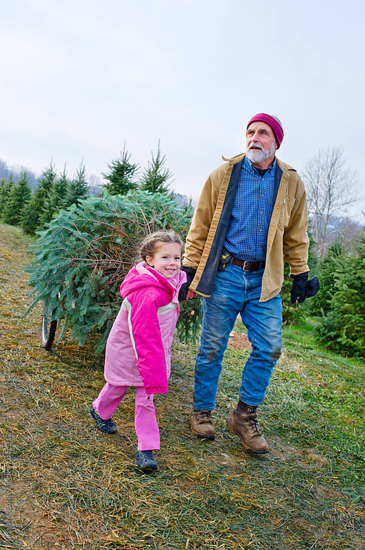 Grandfather and Granddaughter Bring Home Fresh Cut Christmas Tree by Brian McEntire for Stocksy United