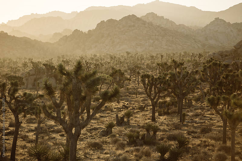 Desert views. by Christian McLeod Photography for Stocksy United