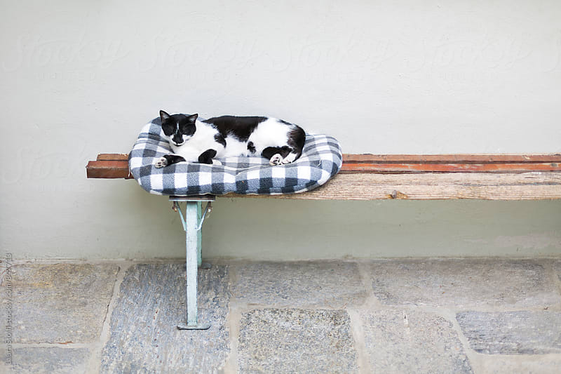 Cat sleeps on soft kennel on top of old wooden bench by Laura Stolfi for Stocksy United