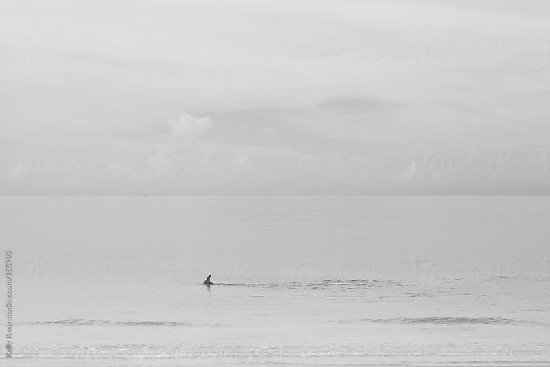 porpoise swimming near the shore by Kelly Knox for Stocksy United