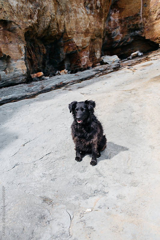 Black shaggy dog sitting on the sand on the beach by KATIE + JOE for Stocksy United