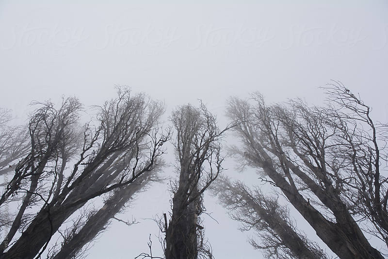 Bare trees  by Pixel Stories for Stocksy United