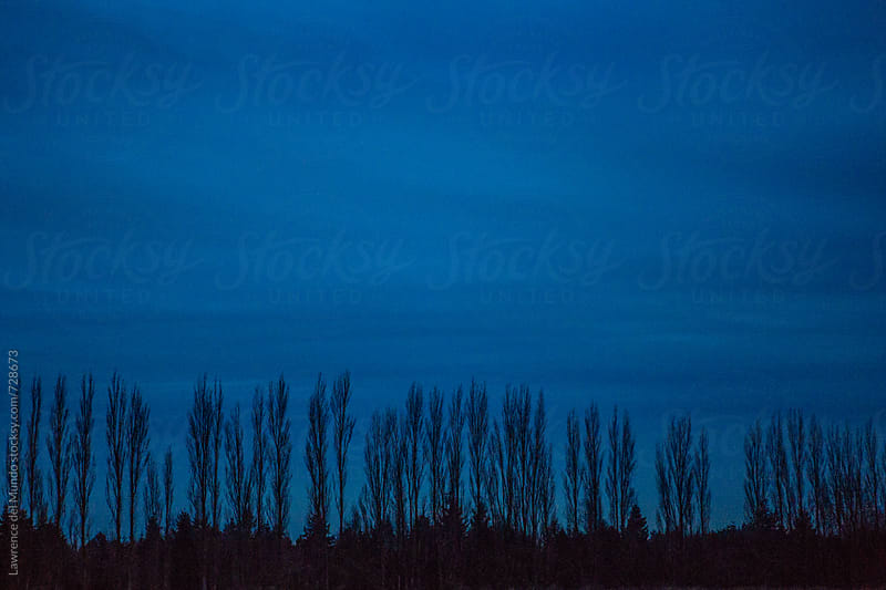 Tree line shot against the winter twilight by Lawrence del Mundo for Stocksy United