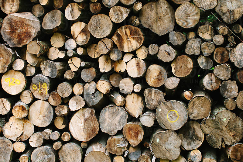Stack of cut logs by Zocky for Stocksy United