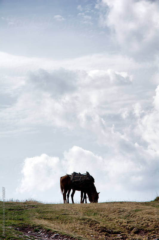 Horse on hill by Pixel Stories for Stocksy United