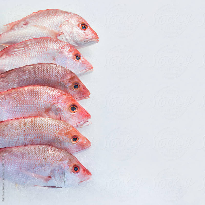Fresh Red Snapper on Bed of Ice by Per Swantesson for Stocksy United