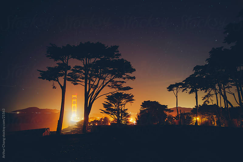Golden Gate between Cypress by Arthur Chang for Stocksy United