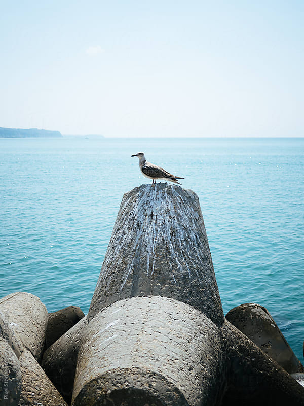 Seagull resting on concrete tetrapod by Pixel Stories for Stocksy United