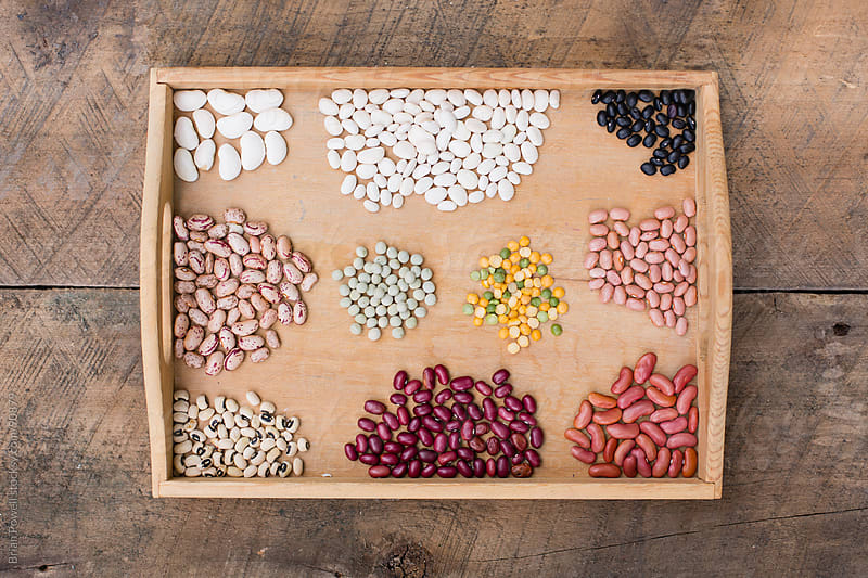 various beans sorted into groups by Brian Powell for Stocksy United