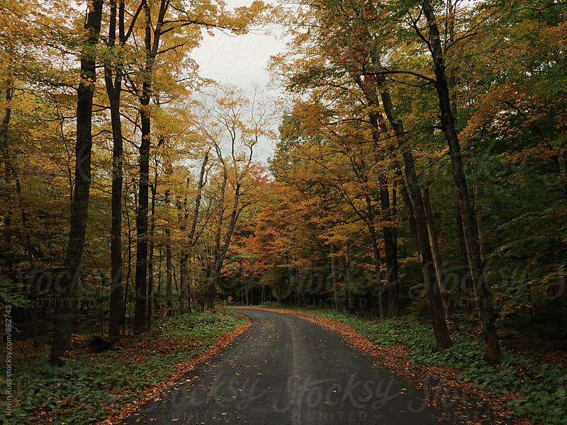 Autumn Leaves Along Country Road by Kevin Russ for Stocksy United
