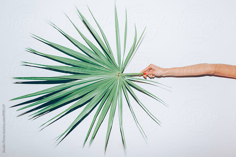 Hand holding palm leaf. by Studio Firma for Stocksy United