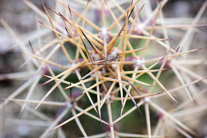 Close up of a cactus plant by Marcel for Stocksy United