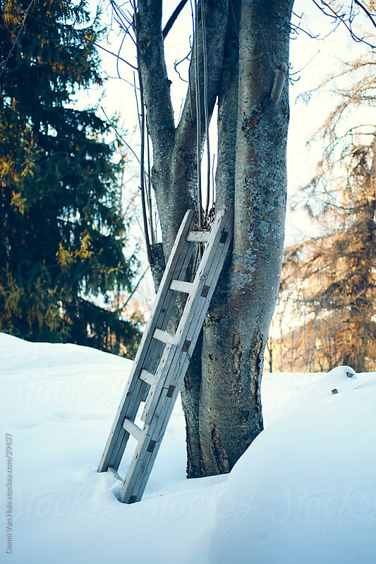 Wooden ladder standing against a tree  by Denni Van Huis for Stocksy United