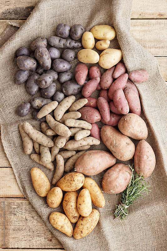 Food: Different sorts of potatoes, biodiversity by Ina Peters for Stocksy United