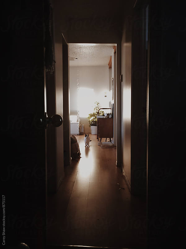 Dark hallway with cat looking at camera by Carey Shaw for Stocksy United