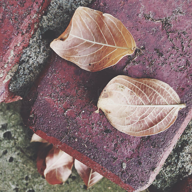 Fallen Leaves on Brick by Leigh Love for Stocksy United
