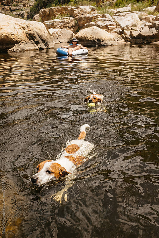 juck russel dogs swimming in a mountain lake in a river by Micky Wiswedel for Stocksy United