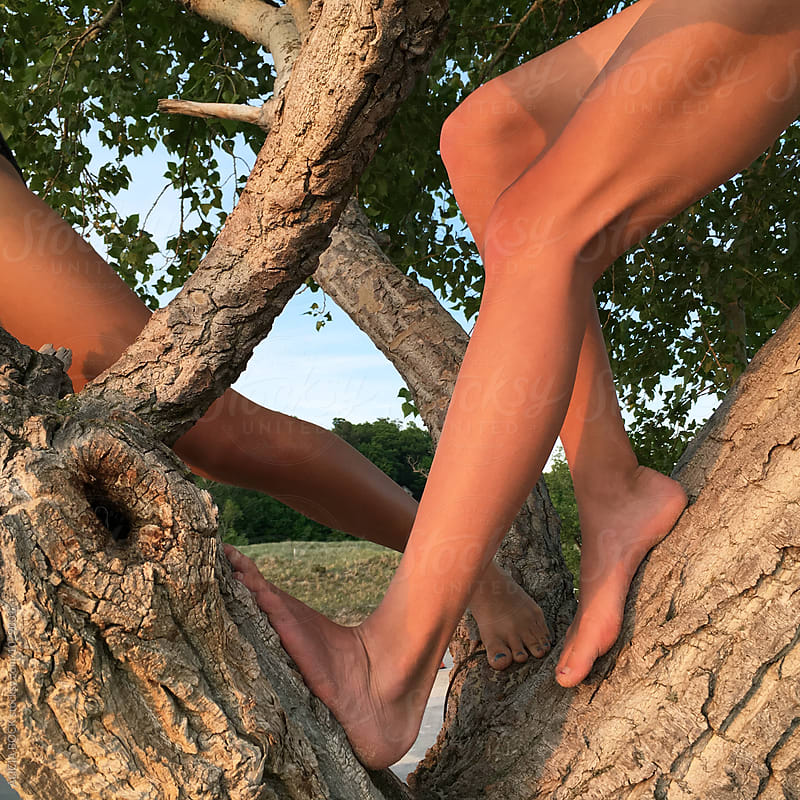 The Legs Of Teen Girls Climbing Trees At Sunset by ALICIA BOCK for Stocksy United