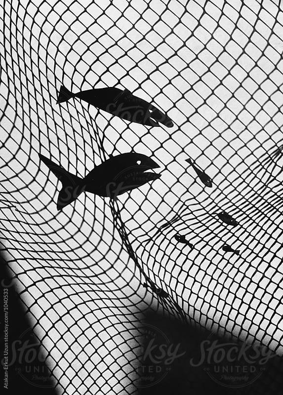 shadow play of fish caught in net by Atakan-Erkut Uzun for Stocksy United
